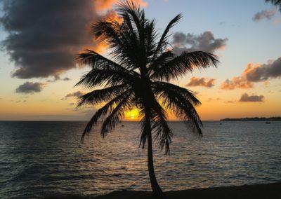 tramonto tropicale con palma