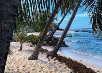 spiaggia delle barbados