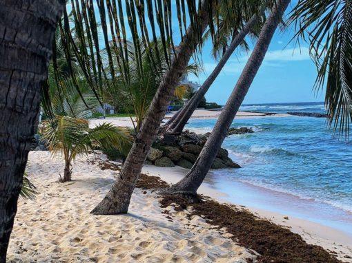 Barbados & Grenadine